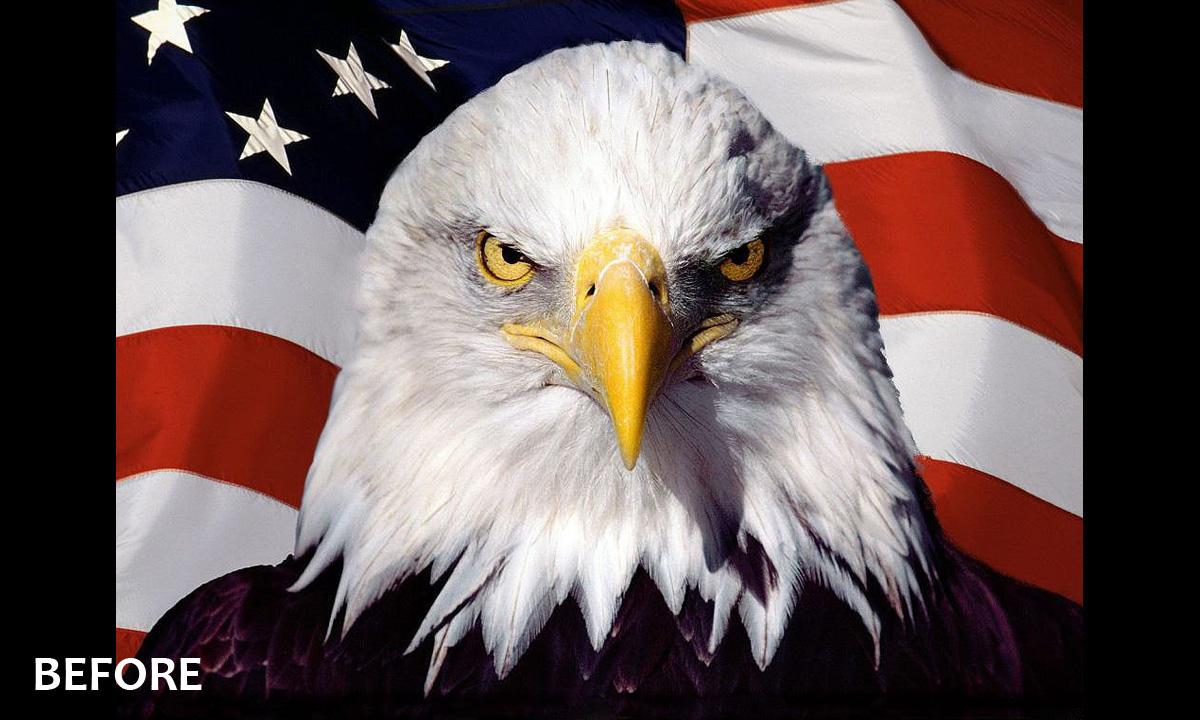 Design For US Flag Eagle
